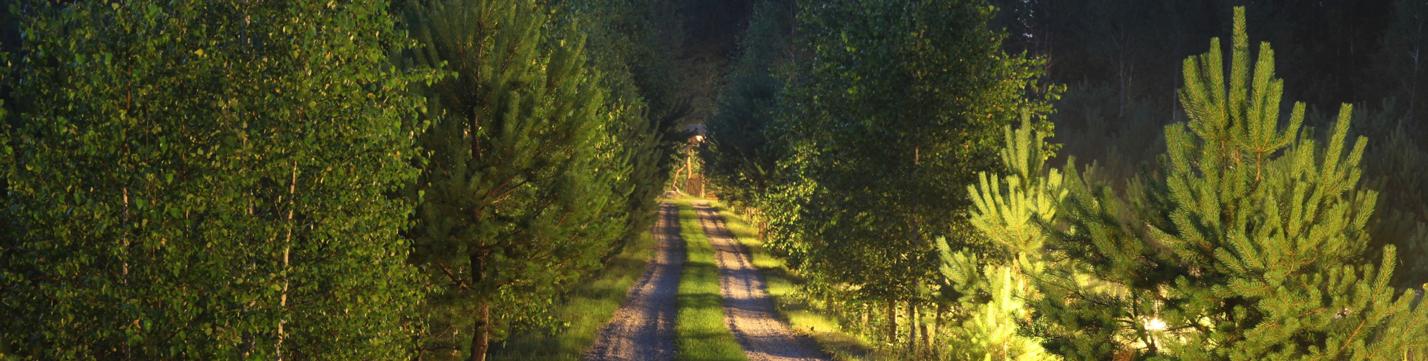 kelias i turausku sodyba